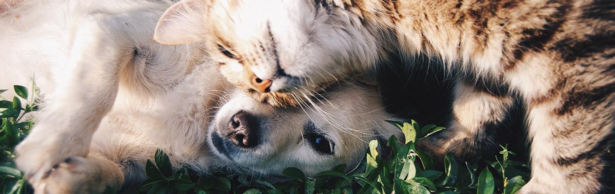 jardin sécurisé chat