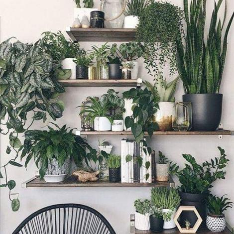 decoration plantes style tropical