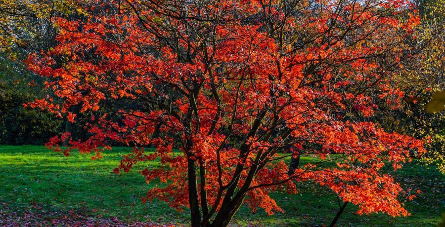 amenagement-jardin-zen-creer-coin-paradis-asiatique-arbre-feuilles