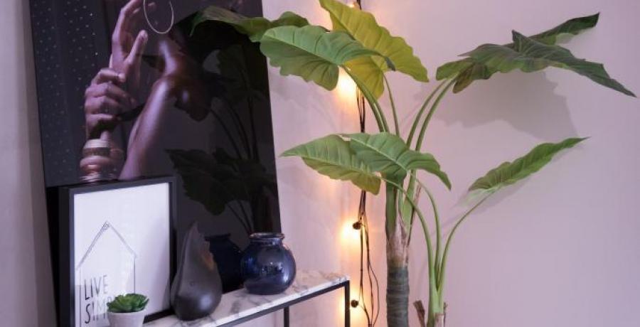 lumiere plante et tableau appartement familial